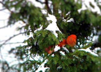 red little fella by LiLa-fLies