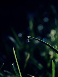 .id.. by LiLa-fLies