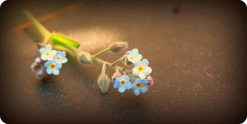 a hint of summer by LiLa-fLies