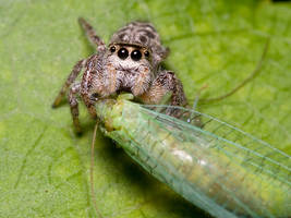 Jumping Spiders Don't Share by Twitch1977