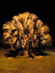 Tree at night by Inebny