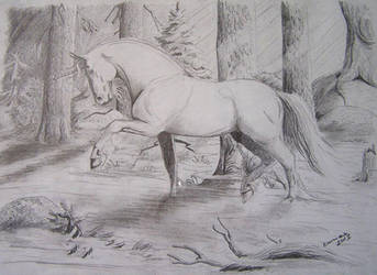 Unicorn by Duir