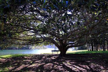 Tree by italiano444