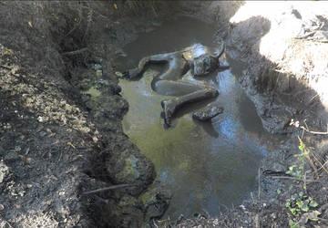 Mud Creature by hyperjet