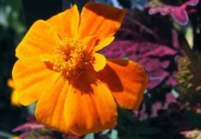 garden gold by sataikasia