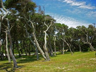 Sunny Oaks by sixwings