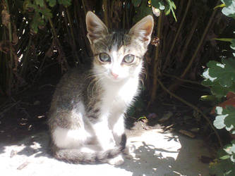 sweet kitty by freshlemon12