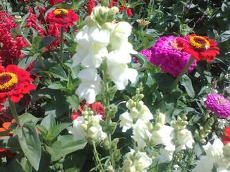 Flowers by freshlemon12
