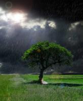 Summer Rain by harmonious-madness