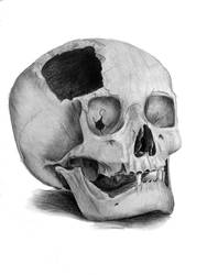 skull again by timacs