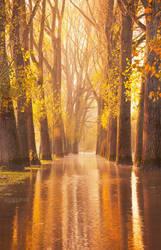 Waltzing Wood by NoahSud