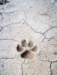Paw Prints Stock 3 by AngelFeathersStock