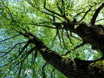 Tree Duality by AdMalamCrucem