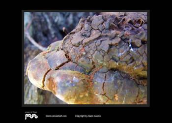 Rotten mushroom by miorio