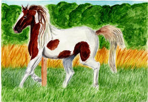 Watercolour Paint Horse by SophieXSmith