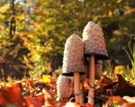 Sunlit mushrooms by nkyvi