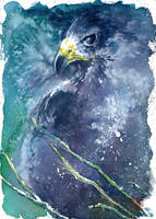 Zone Tailed Hawk by Ephirel