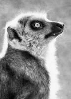 Lemur by Elluwah