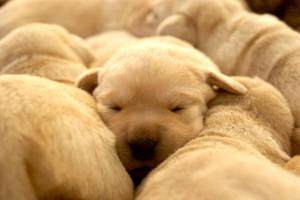 Sierra puppies 6 by ManicMechE