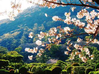 Sakura 02 by AzureKitten