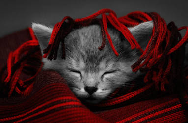 Aww so cute by NightKn8