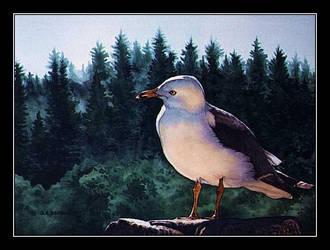 Curious Gull by CitizenOlek