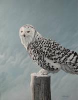Ghost of Winter - Snowy Owl by CitizenOlek