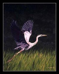 Great Blue Heron by CitizenOlek