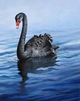 Black Swan by CitizenOlek