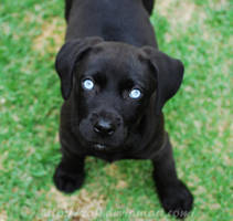 Cute Puppy... by Zafi