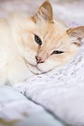 Cat by CaptainNuss