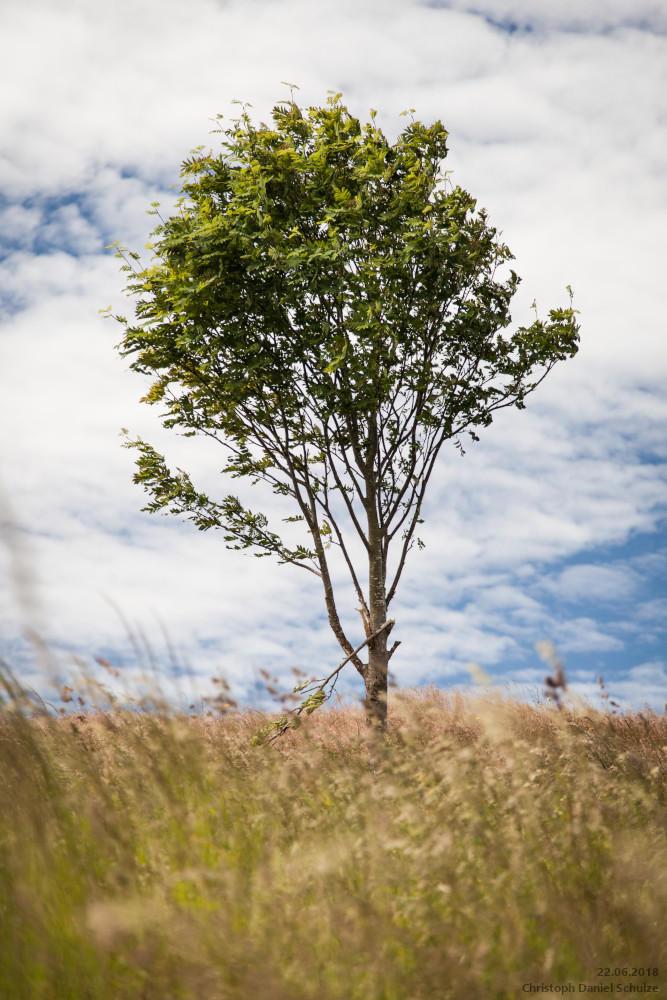 A Tree by CaptainNuss