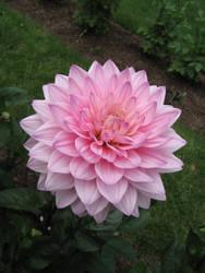 Tickled Pink by BR0KEN-TYP3-WRIT3R