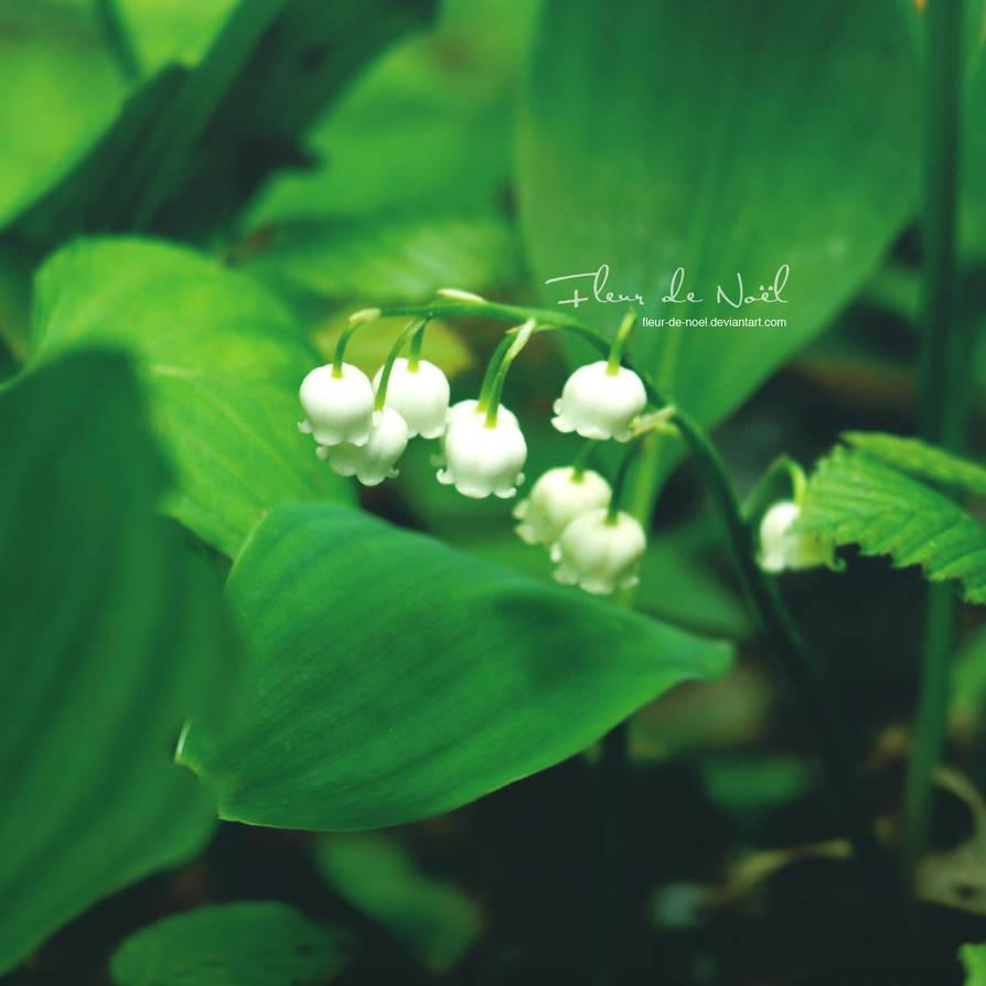 Lily Of The Valley By Fleur-de-Noel On DeviantArt