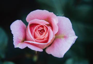 Secret Garden by Fleur-de-Noel