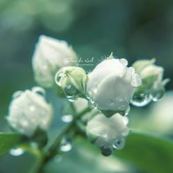 Peace Within by Fleur-de-Noel