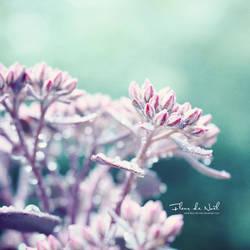 Purple Haze by Fleur-de-Noel