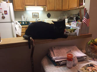 Little Black Cat by Cosmic--Chaos