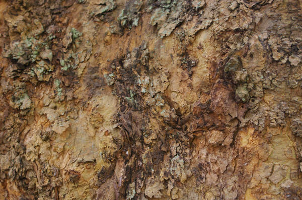 Tree Texture 03 by Dralliance-Stock