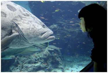 aquarium by unholycommunion