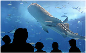 a whale by unholycommunion