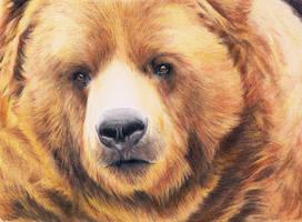 Bear - realistic drawing by Katchina-Q2