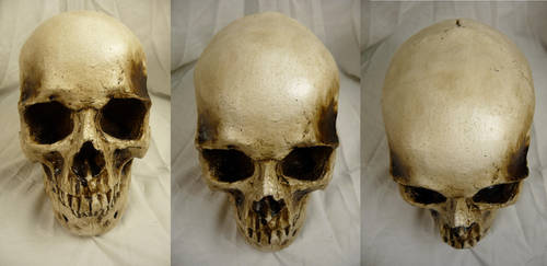 Human Skull Stock I by Melyssah6-Stock