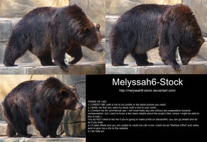 Bear Stock 4 by Melyssah6-Stock