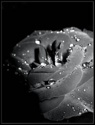 Dark Rose by Zypa