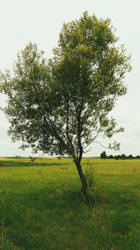 Just a tree :) by FreezeXY