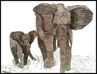 Cropped elephants walking by jcoultercv