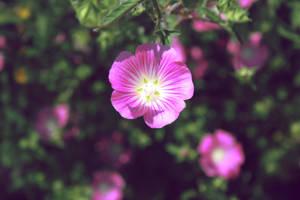 Summer's Flowers. by ZeNey