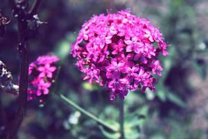Summer Flowers.. by ZeNey
