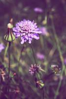 Summer Flowers... by ZeNey